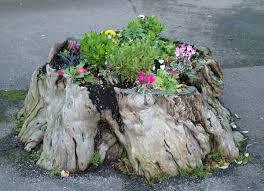 tree stump planters 10 cheap landscaping ideas you can diy in a day bob vila