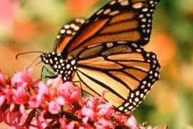 hummingbird u0026 butterfly garden plans home guides sf gate