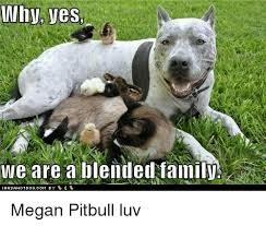 Megan Meme - why yes we are a blended family megan pitbull luv family meme