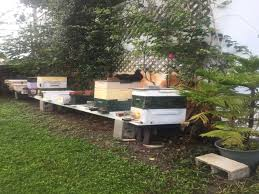 Backyard Beehive Palm Beach County Beekeepers Association