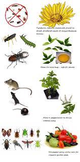4 natural ways to get rid of garden pests gardening pinterest