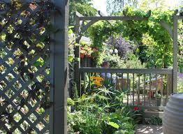 ideas for garden arches grows on you