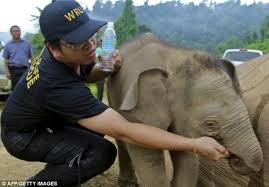 Can You Bury Animals In Your Backyard Elephants Really Do Grieve Like Us They Shed Tears And Even Try
