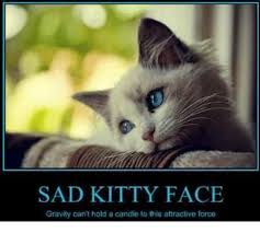 Sad Kitten Meme - sad kitty face gravity can t hold a candle to this attractive force