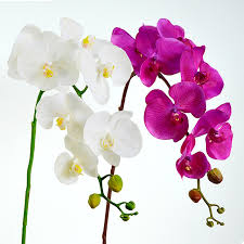 wedding flowers orchids purple phalaenopsis orchids 7 heads silk real touch flower orchids