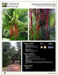 native florida plants low maintenance articles cotleur u0026 hearing landscape companycotleur u0026 hearing
