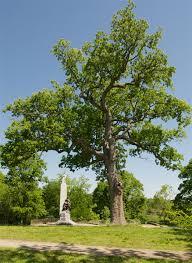 three reasons to nashville s historic trees