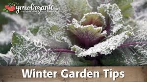 winter garden tips organic gardening blog