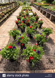 display of potted plants for sale in garden center centre uk stock
