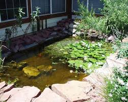 How To Make A Patio Pond Spotted Pond Turtle Care Sheet