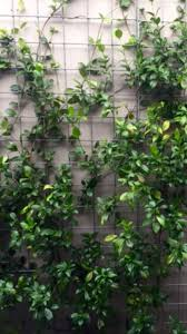 61 best natives images on pinterest flora native plants and nurses