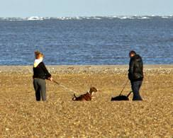 Holiday Cottages Isle Of Wight by Pet Friendly Self Catering Holiday Cottages And Apartments In Isle