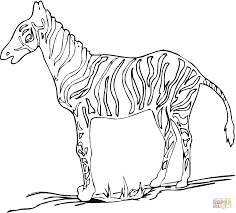 zebra coloring pages printable kids animals pictures color