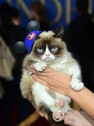 Lawyer Cat Meme - grumpy cat wins 710 000 in copyright infringement lawsuit
