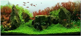 Aquascaping Plants July 2011 Aquascape Of The Month