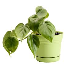 Plants That Do Not Need Much Sunlight by 10 Robust Houseplants That Can Survive In Even The Darkest Corner