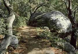 Botanic Garden Santa Barbara Pritchett Trail The Santa Barbara Botanic Garden