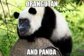 Panda Meme - orangutan and panda meme orangupanda 110684 page 3 memeshappen