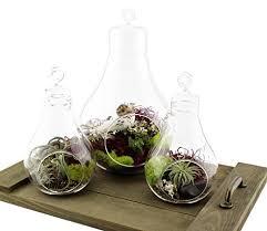 light bulb glass terrarium set of 3 pieces u2013 la boheme life
