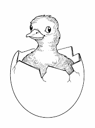 duck coloring pages free printable pictures coloring pages for kids