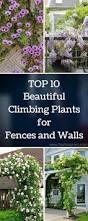 homelife 10 best plants for vertical gardens best 25 climber plants ideas on pinterest pergula ideas