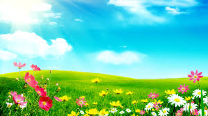 meadow flower free desktop wallpapers for widescreen hd and mobile