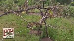 grape trellis lovely diy grape vine trellis 98 for your with diy