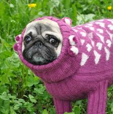 pug sweater sweater knit sweater sweater for pug clothing for pug