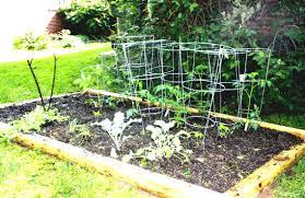 vegetable garden drawing
