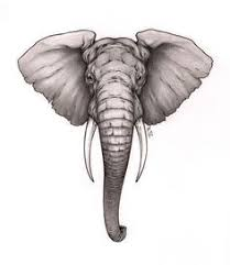 the 25 best elephant face drawing ideas on pinterest elephant
