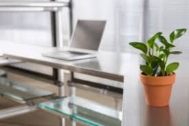 Desk Plant New Study Office Plants Can Improve Productivity Up To 15