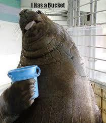 Walrus Meme - lolrus encyclopedia dramatica