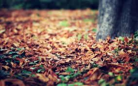 mac backgrounds hd fall macro leaves fall autumn tree nature