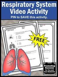 free human body circulatory system activities video and worksheet
