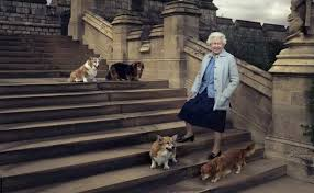 queen elizabeth dog elizabeth adopts dog she fell in love with during regular walks