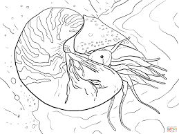 vampire squid coloring page free printable coloring pages