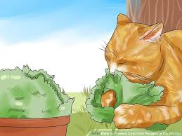 Keep Cats In Backyard Expert Advice On How To Prevent Cats From Pooping In The Garden