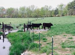 va farm bureau virginia farm bureau vafarmbureau
