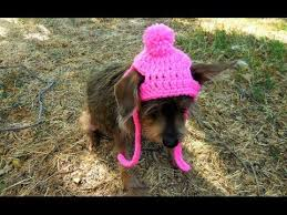 best 25 small dog sweaters ideas on pinterest diy crochet dog
