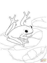 tree frog coloring page chuckbutt com