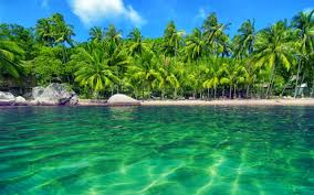beaches trees nature water beautiful scenery beach house