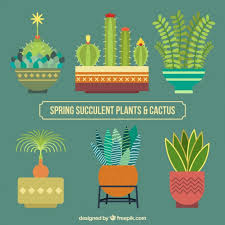 flat design flat design cactus collection vector free