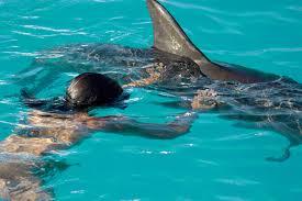 dolphin ride experience dolphinaris