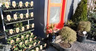 native plants in new zealand shop1 jpg