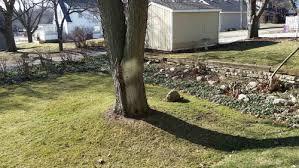 need ideas plantings around tree trunk