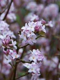 native plants to illinois plants that flower in winter hgtv