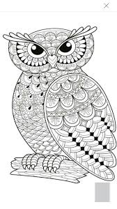 Halloween Themed Coloring Pages by Best 25 Owl Coloring Pages Ideas Only On Pinterest Owl