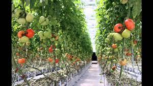 great home vegetable garden ideas on a budget u2013 modern garden