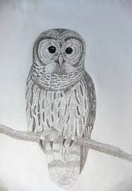 images of owl sketch by nuxxir sc