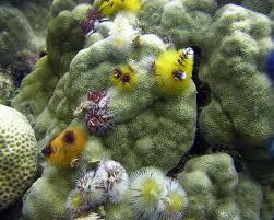 christmas tree worms make a marine xmas webecoist